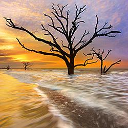 Gezeitenbäume-Craig Bill-Finalist-Landschaft-444
