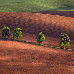 Alley in the fields-Peter Svoboda-silver-landscape-580