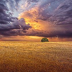 Alone-Antonio Coelho-finalist-landscape-501
