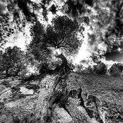 wind and tree-Luzzitelli Danieli Productions-finalist-landscape-2251