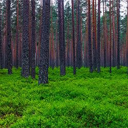 Interweave-Torleif Lie-finalist-landscape-2238