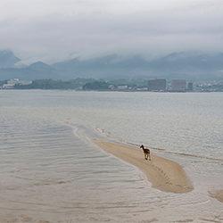 Deer of Miyajima-Clarence Lin-finalist-landscape-2236