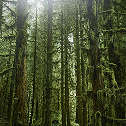 trees-Chris Gordaneer-finalist-landscape-2283