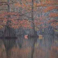 Cypress Autumn-Karin De Winter-bronze-landscape-2152