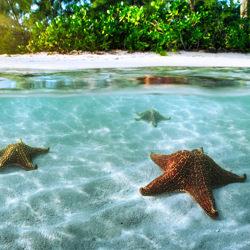 Starfish Point-Craig Bill-Finalist-Landschaft-3438