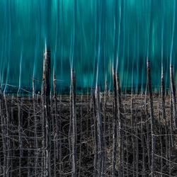 Blue Pond Reflection-Kenneth Lam-Finalist-Landschaft-3609