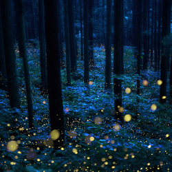 Deep forest fairies-Kazuaki Koseki-finalist-landscape-3529