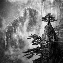 Huangshan Pine Tree-Karin De Winter-finalist-landscape-3528