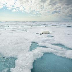 Polar Bear Siesta-Jo Van Rossem-silver-landscape-3727