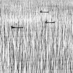 Aquaculture - Seaweed-Jo Van Rossem-silver-landscape-3728