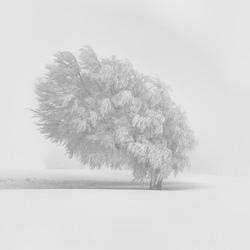 weiße Schönheit-Judith Kuhn-Silber-Landschaft-5443