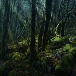 Enchanted Light Beam-Virgil Reglioni-finalist-landscape-5225