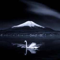 Swan on mirror-Takashi-gold-landscape-5398