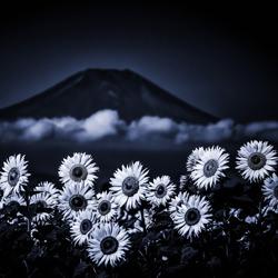 Sunflowers clouds and Mt Fuji-Takashi-finalist-landscape-5222