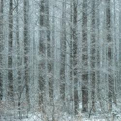 Quiet early winter forest-Kazuaki Koseki-bronze-landscape-5032