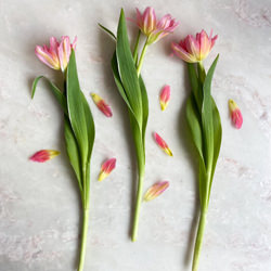 Tulips on Marble-Curtis Gallon-finalist-mobile-6015