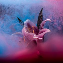 Paint Flowers-Jonathan Knowles-finalist-still_life-3798