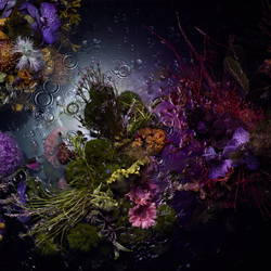 Bloom Bloom Fleur-Cheuk Lun Lo-Bronze-Stillleben-5471