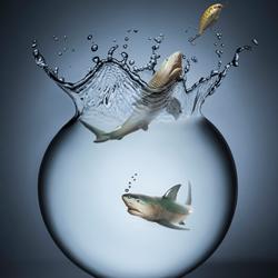 Shark Attack-Marc Sabat-silver-still_life-5619