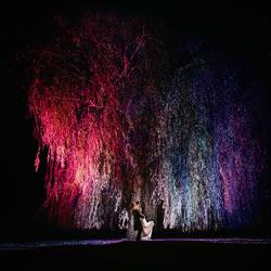 Willow Below-Rais De Weirdt-silver-wedding-5013
