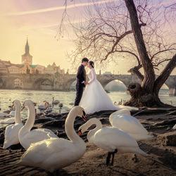 the Swan Lake-Jack Wong-finalist-wedding-4915