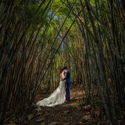 bamboo forest-Kin Lok Chan-bronze-wedding-6128