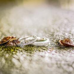 Snails On Rings-Mischa Baettig-bronze-wedding-6114