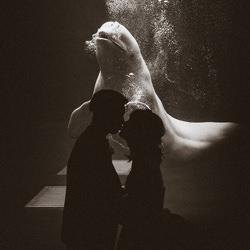 The Magic of Happiness-Kouta Miyawaki-bronze-wedding-6146