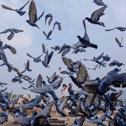 Birds and frames-Divyam Mehrotra-bronze-wedding-6163