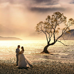 The Wanaka Tree-Zhuo Ya-bronze-wedding-6097