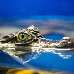 Reptile-Andrey Lobodin-finalist-wildlife-5750