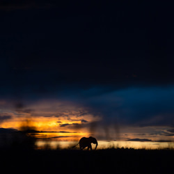 Solitude Giant-Arnfinn Johansen-finalist-wildlife-5777