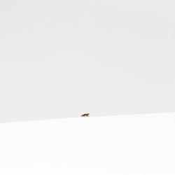 Lonely-Miquel Angel Artus Illana-finalist-wildlife-5778