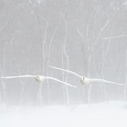 Elegance in flight-Miquel Angel Artus Illana-silver-wildlife-5831
