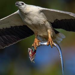 Top of the food chain-Kelvin Leong-finalist-wildlife-5779