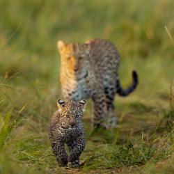 Mom\'s watchful presence-Nitin Michael-finalist-wildlife-5738