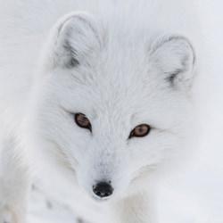 WHITE ON WHITE-Dorota Senechal-finalist-wildlife-5762