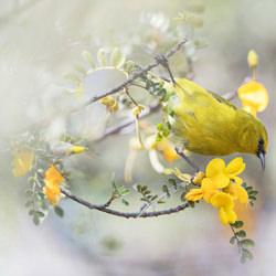 BIRD ON THE EDGE-Dorota Senechal-finalist-wildlife-5763