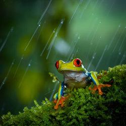 Curious-Francisco Donaire-finalist-wildlife-5781