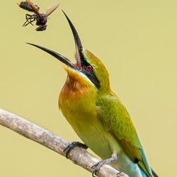 Toss and in you go-Kelvin Leong-finalist-wildlife-5780