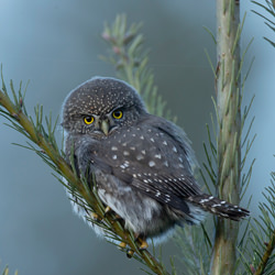Tiny Hunter-Pam Mullins-bronze-wildlife-5697