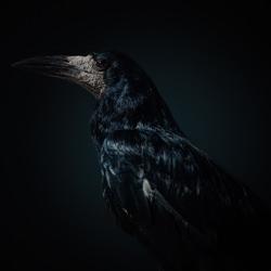 The reborn wizards-Vladimir Karamazov-finalist-wildlife-5765
