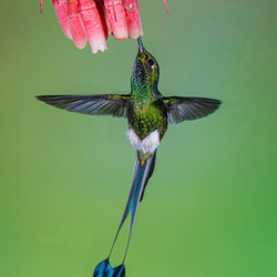 TWO TAILS-Marcello Galleano-finalist-wildlife-5759