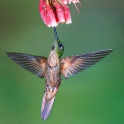 MAGIC FLIGHT-Marcello Galleano-finalist-wildlife-5760