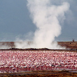 Flamingos-Sanat Shodhan-finalist-wildlife-5784