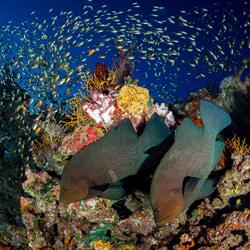 A world of hidden wonders-Nicholas Samaras-finalist-wildlife-5718