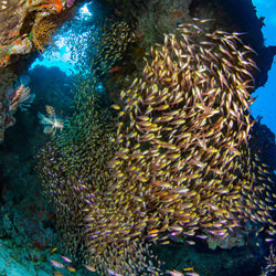 A shoal of Sweepers-Nicholas Samaras-finalist-wildlife-5719