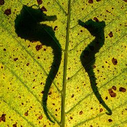 Courtship-Nicholas Samaras-bronze-wildlife-5667