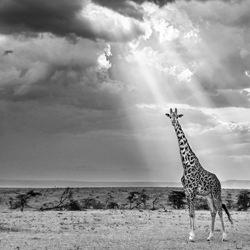 Limelight-Harry Skeggs-finalist-wildlife-5745