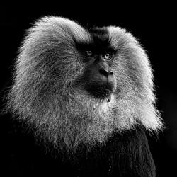 Frazzled-Zhayynn James-finalist-wildlife-5725